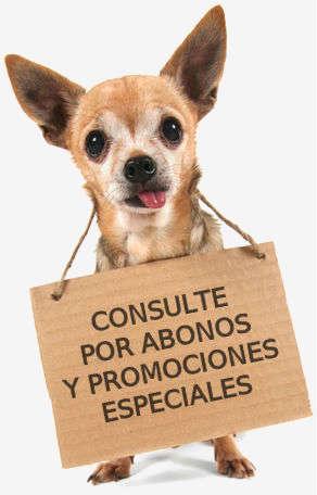 Tom Peluqueria Canina
